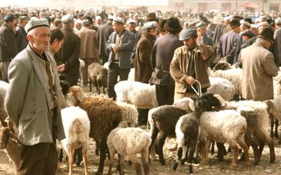 Silk Road Story